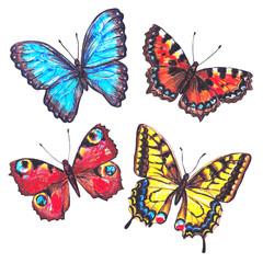 Detailed hand drawn marker butterflies. Set of butterflies