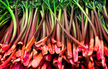 Fresh rhubarb stalks harvested and ready for sale at a farmers market.