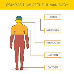 Composition of human body