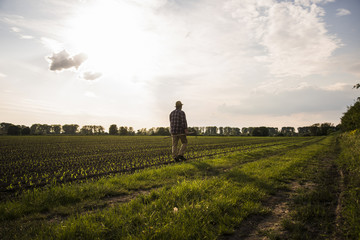 Farmer walking with rake along a field
