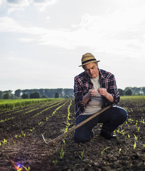 Farmer in a field examining crop