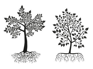 Wall Mural - Black trees and roots silhouettes with leaves. Vector set