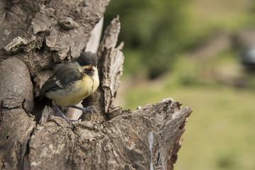 baby bird on tree