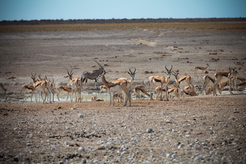 Animals' wildlife in Namibia, Africa