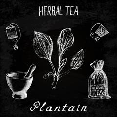 Plantain herbal tea. Chalk board set of vector elements