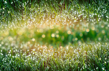 Creative collage. Spring, Fresh grass with dew. color in nature.