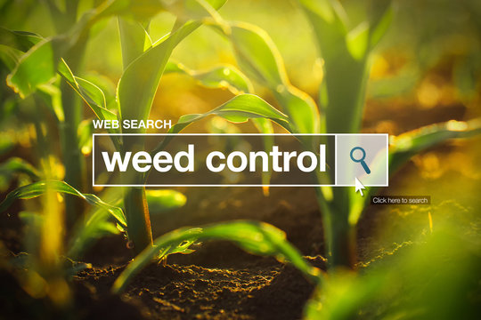 Weed control in internet browser search box