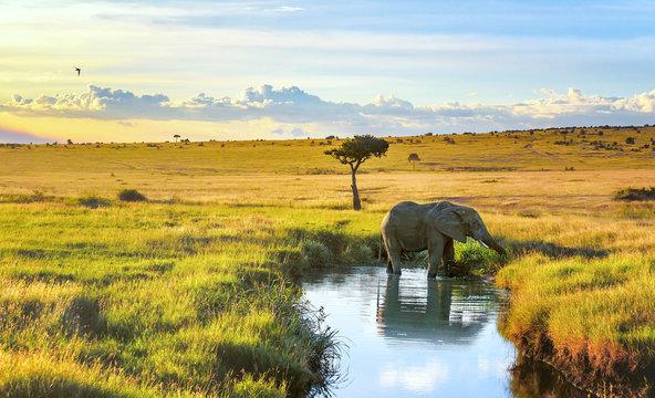 Elepant cooling down in the water in Masai Mara resort, Kenya