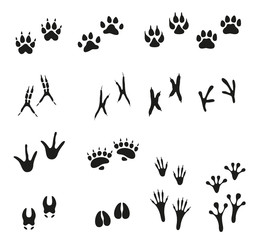Tracks of wild animals and birds. Paw print.
