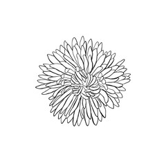 Hand drawn flower. Flower outlines in sketch style isolated on white background. Black ink flower illustration for coloring books.