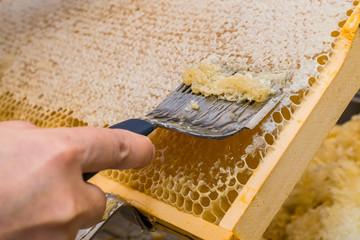 Imker beginnt die Honigwabe zu öffnen