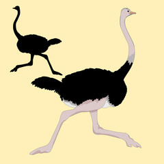 ostrich races realistic vector illustration