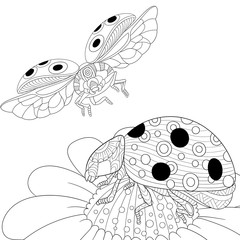 Zentangle stylized cartoon flying ladybugs and daisy flower. Hand drawn sketch for adult antistress coloring page, T-shirt emblem, logo or tattoo with doodle, zentangle, floral design elements.