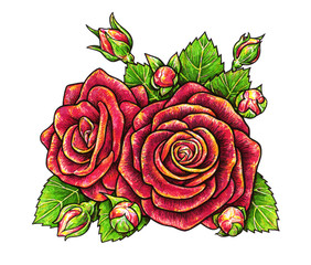 Red roses flowers is isolated on a white background. Rose drawing front view. Handwork by felt-tip pens. The sketch for a tattoo