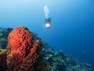 Unterwasser - Riff  - Schwamm - Taucher -Tauchen - Curacao - Karibik