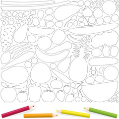 Fruits and vegetables outline coloring page, with four color pencils. Isolated vector illustration on white background.