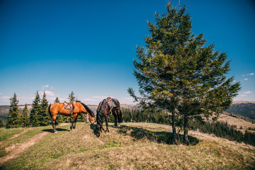 Horses grazed on a mountain pasture against mountains