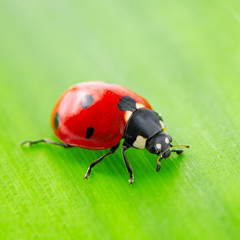 red ladybird on green leaf