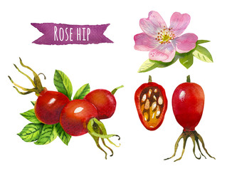 Rose hip, watercolor illustration,  clipping path included