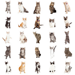 Large Collection of Cats and Kittens