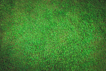 Background of grass field with green clover