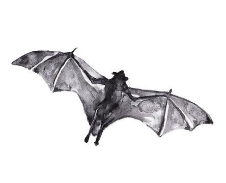 Watercolor illustration of a bat