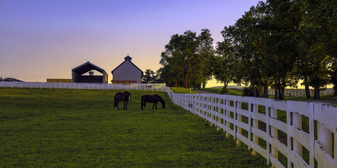 Horse farm at dawn