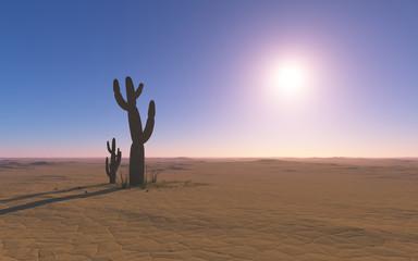 Cactus in the desert under the hot sun.