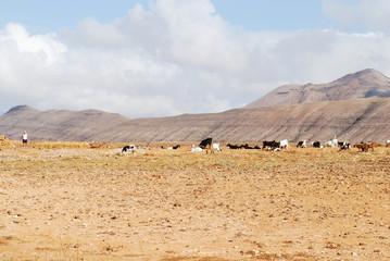 pastore con il gregge di pecore e capre