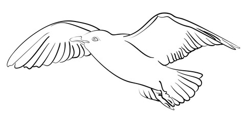Vector ink sketch seagull in flight