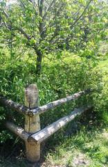 Sunlit wooden fence in summer park