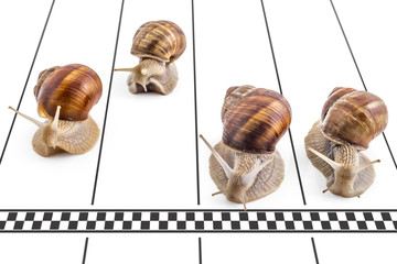 Four garden snails (Helix aspersa) approaching the finish line on the running track on white background. Teamwork concept, competition.