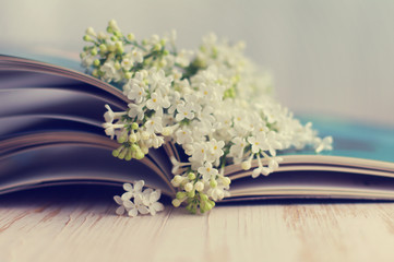 Bouquet of a white lilac on the open book. Spring romantic bouquet of a white lilac and album. Greeting card for lovers, friendship or valentine's day.