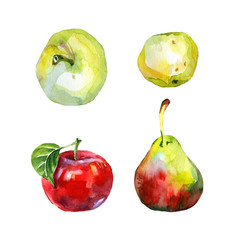 Watercolor apples and pear.