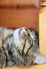 sleeping cat. photo