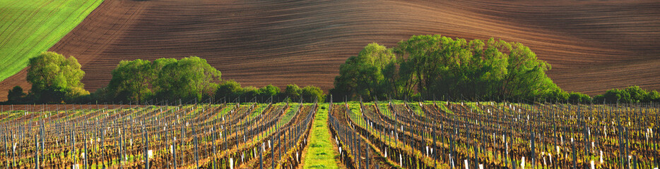 Photo on textile frame Vineyard France vineyard in the evening