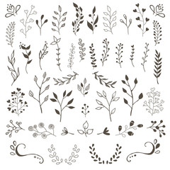 Hand Drawn Vector Floral elements