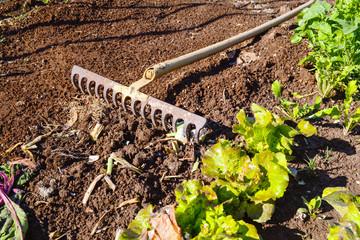 rastrello in un orto