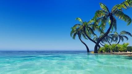 Tropical blue sea palms