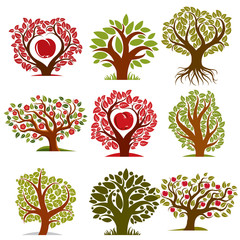 Vector art drawn trees with ripe apples and beautiful red blosso