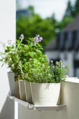 Potted typical italian aromatic herbs at balcony: basil, thyme, sage, rosemary. Selective focus.