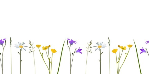 Seamless pattern wild flowers, isolated vector