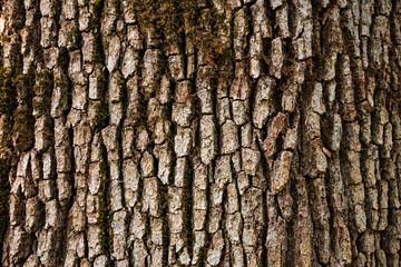 Tree bark detail.