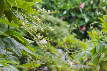 Rain water drop on tree bush and flowers bunch with bokeh for fresh rainy season nature background