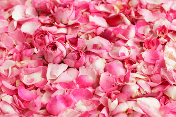 Petals and buds of tea roses to use as background