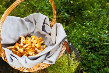 Pfifferlinge im Korb und Messer auf einem Baumstumpf