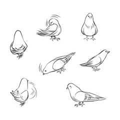 Outline drawing of pigeons on different actions isolated on white background