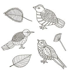 Doosle birds, leaves, hand draw, set