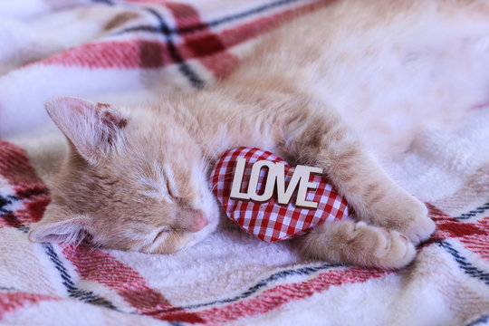 Kitten sleeping with LOVE and heart on blanket