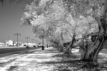 Monochrome infrared image of a tree lined street